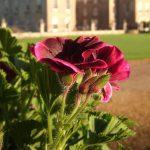 News---Gardeners