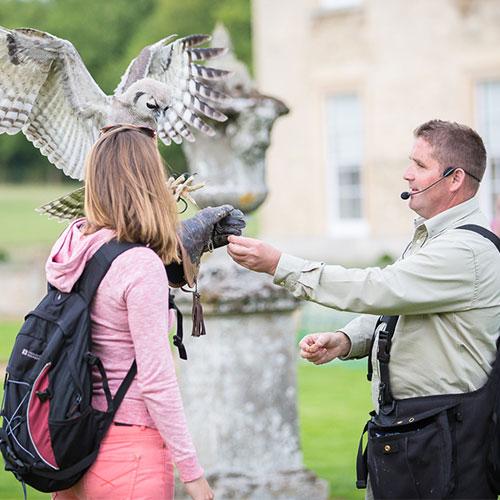 Falconry Bird Display